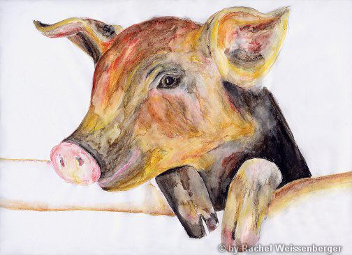 Pig, Watercolour pencils on paper,